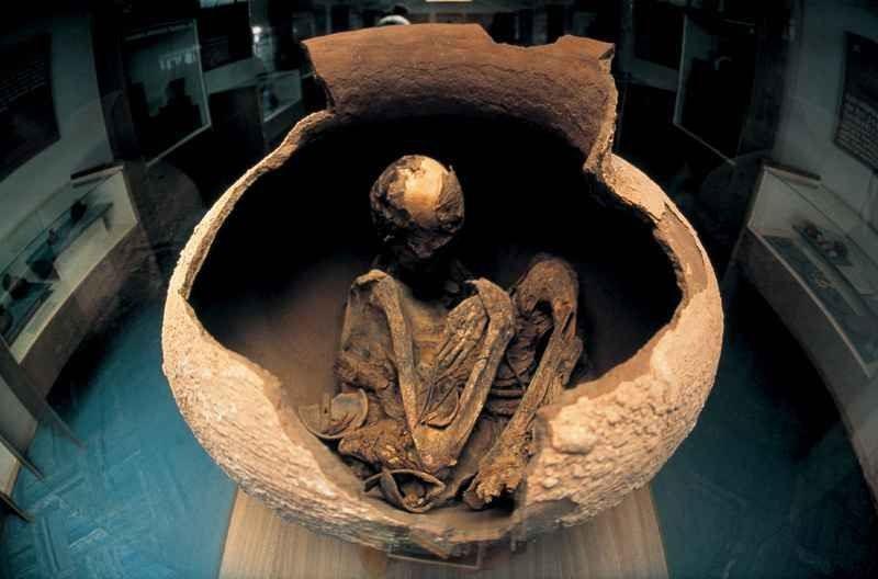 Musée Père Le Paige squelette